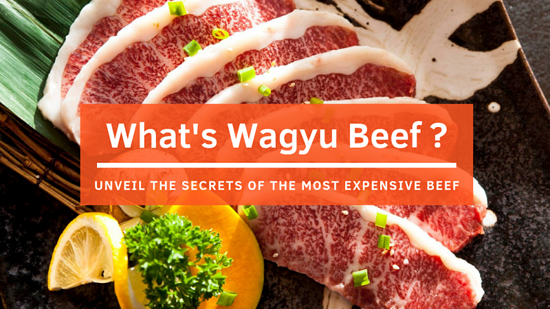 Wagyu Beef: Unveiling The Secrets of The Most Expensive Beef in The World!