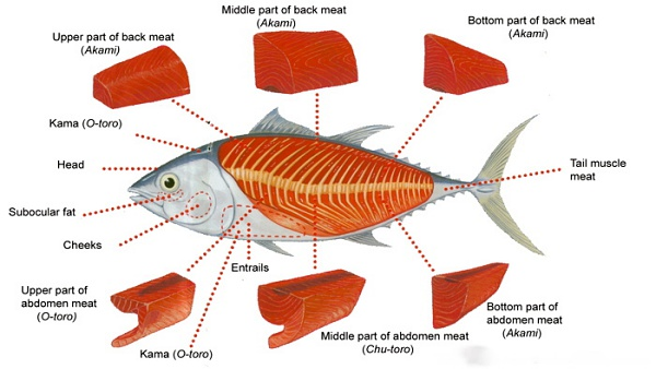 View Types of Bluefin Tuna Sashimi Including Akami, Ootoro and Chutoro Here