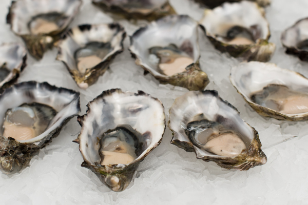 Click to view oysters on ice