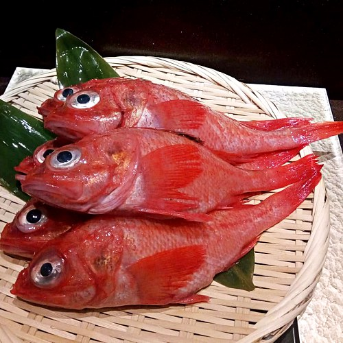 View Special Kikin Fish at Sou Omakase Dining